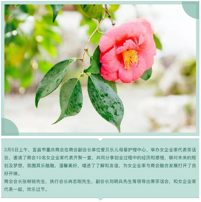 【宜昌市重庆商会】召开女企业家代表茶话会